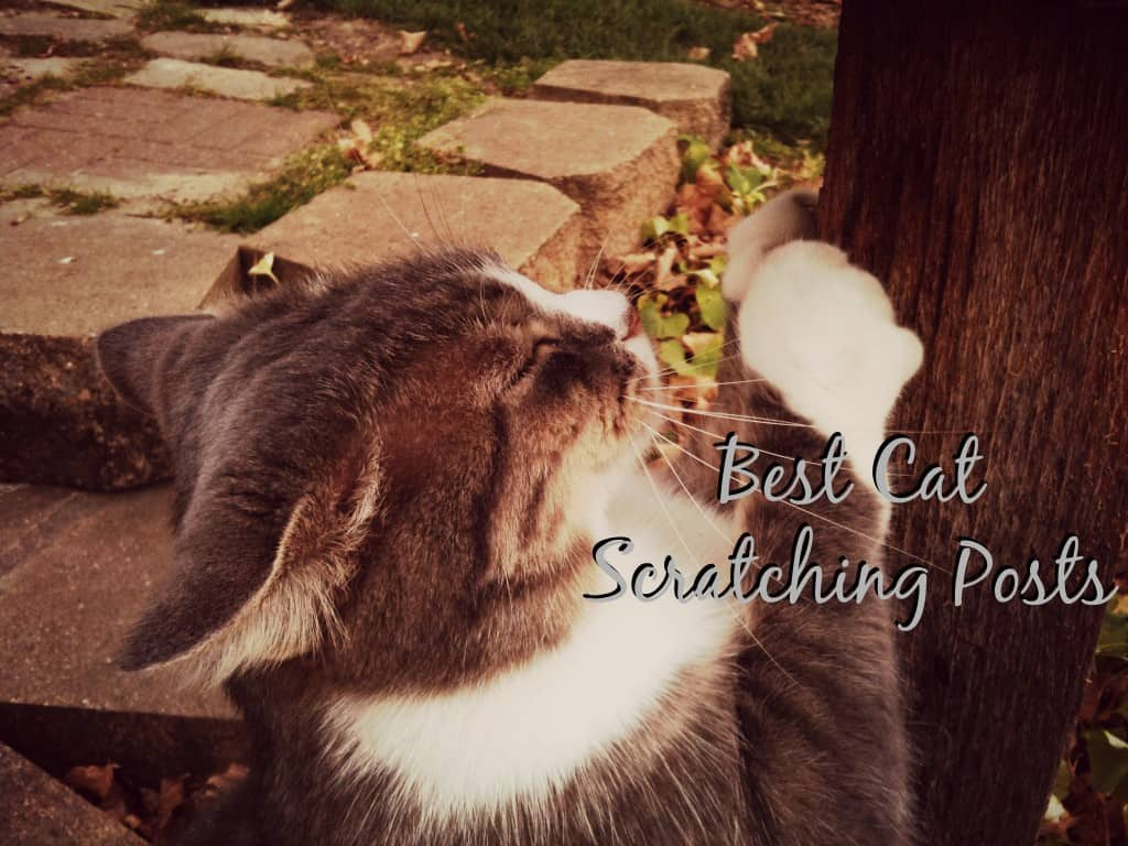 the best scratching posts for cats