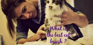 what is the best cat brush header