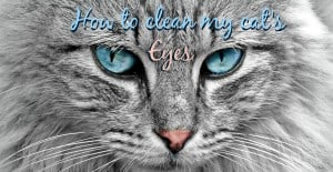 How to clean my cat's eyes