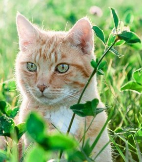 how to stop cats from eating plants