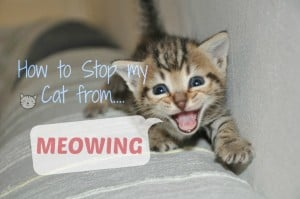 How to stop my cat from meowing
