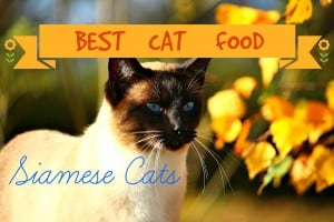 Best Cat Food for Siamese
