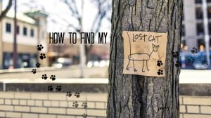 How to Find My Lost Cat - Fluffy Kitty