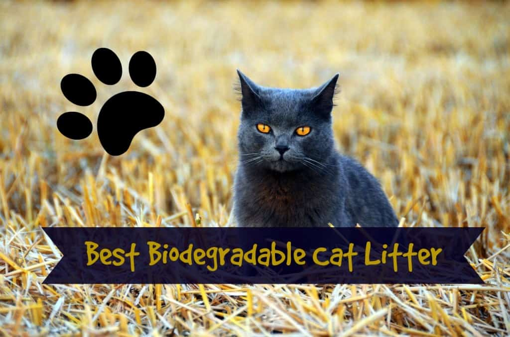 best biodegradable cat litter review header