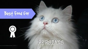 best cat food for persians header