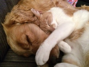 cat-and-dog-775116_640