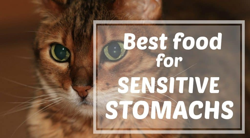 What Is The Best Food For Cats With Sensitive Stomachs