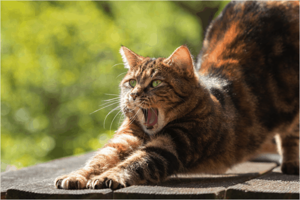 How To Keep Cat S Back Claws Healthy