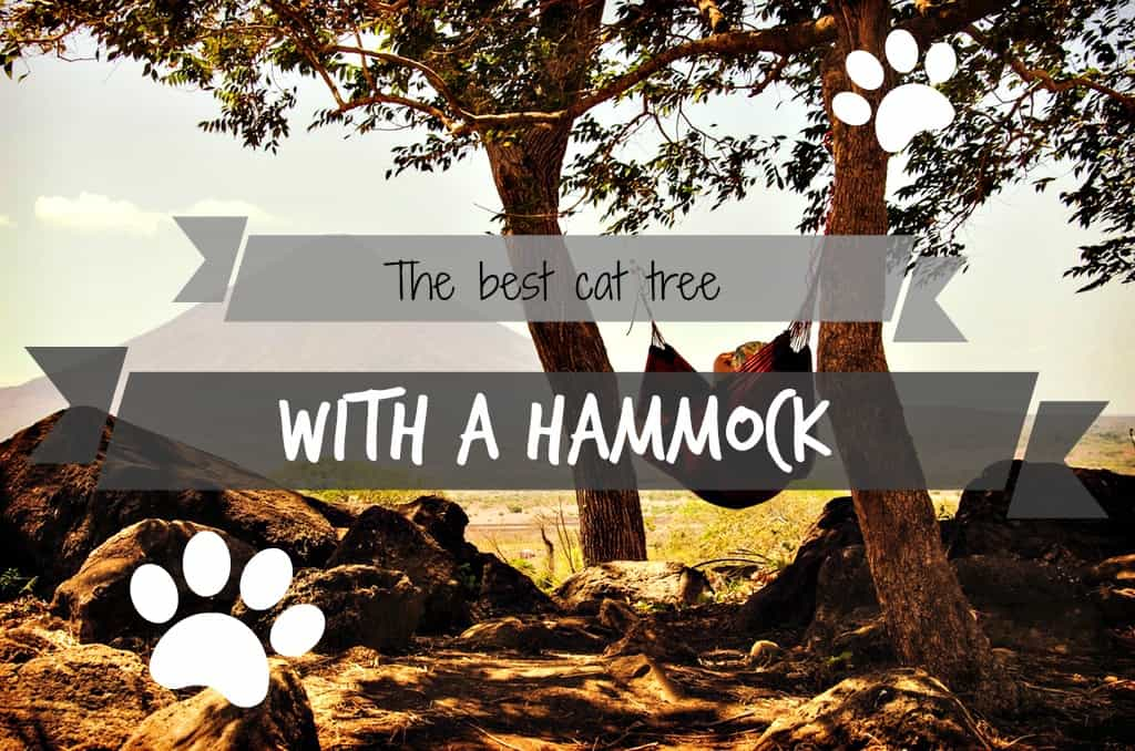 the best cat tree with hammock   fluffy kitty  rh   my cat furniture