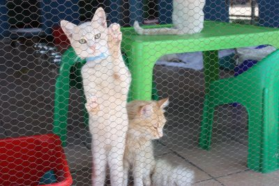 what is a cattery