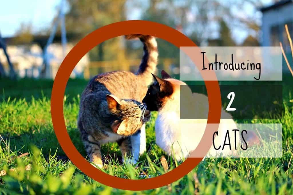 how-to-introduce-two-cats header