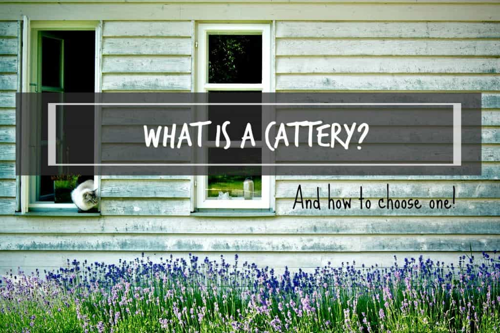 what-is-a-cattery-and-how-to-choose-one-header