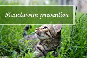 best-heartworm-prevention-for-cats