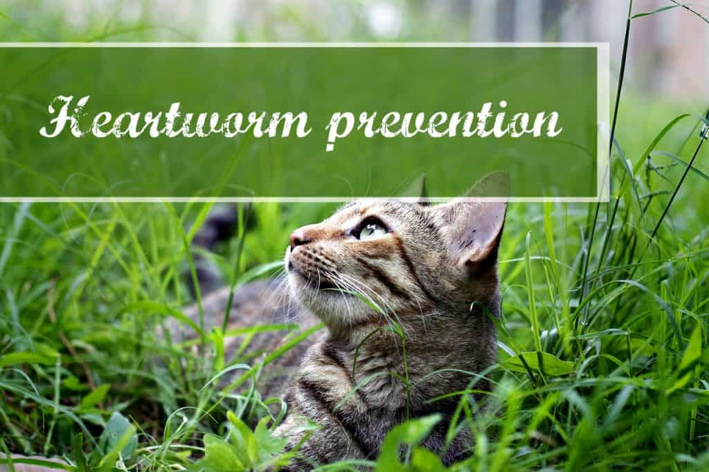 best flea and heartworm prevention for cats