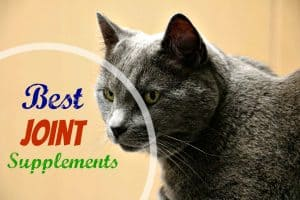 best-joint-supplements-for-cats-header
