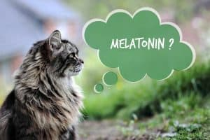 melatonin-for-cat-featured-image