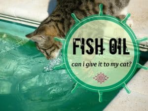 can I give my cat fish oil? | Fluffy Kitty