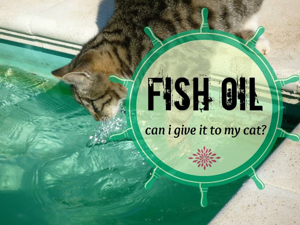 can i give my cat fish oil what you should know fluffy