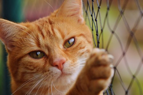 best oral flea treatment for cats