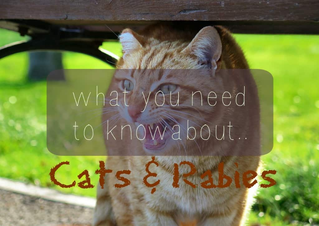 Cats and Rabies