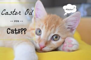 Castor oil for cats