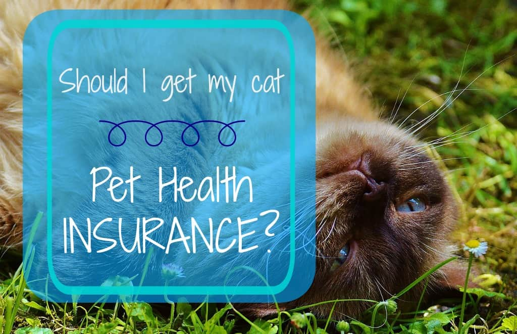 Should I insure my cat?