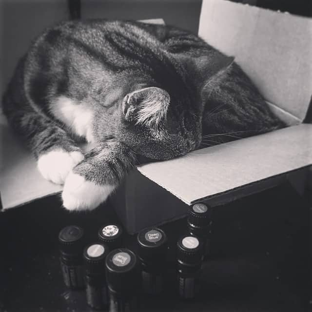 can i use essential oils on my cat fluffy kitty. Black Bedroom Furniture Sets. Home Design Ideas