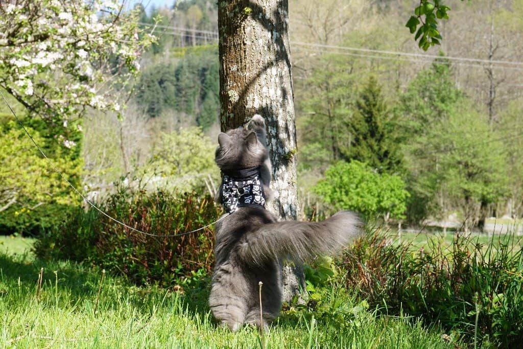 Best Cat Harnesses   Fluffy Kitty
