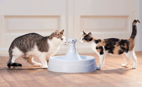 best water fountain for cats