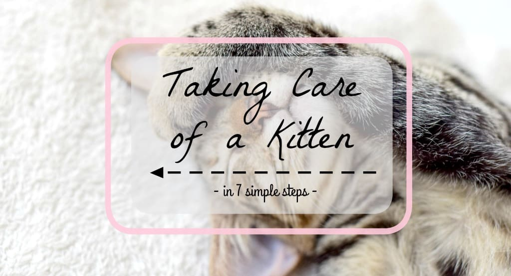 How to Take Care of a Kitten | Fluffy Kitty