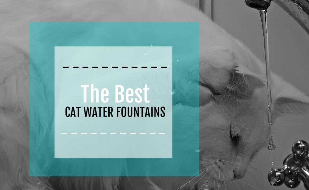 best cat water fountain featured image