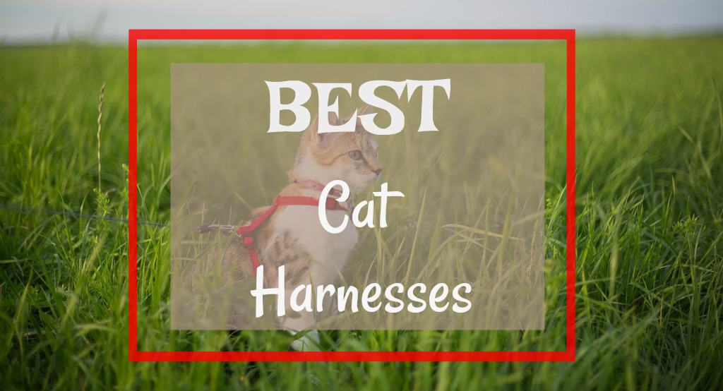 Best Cat Harnesses | Fluffy Kitty