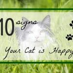 10 Ways to Tell If Your Cat Is Happy | Fluffy Kitty