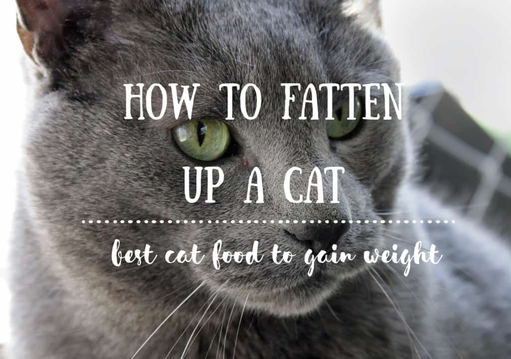 how to help my cat gain weight