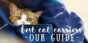 Best Cat Carriers | Fluffy Kitty