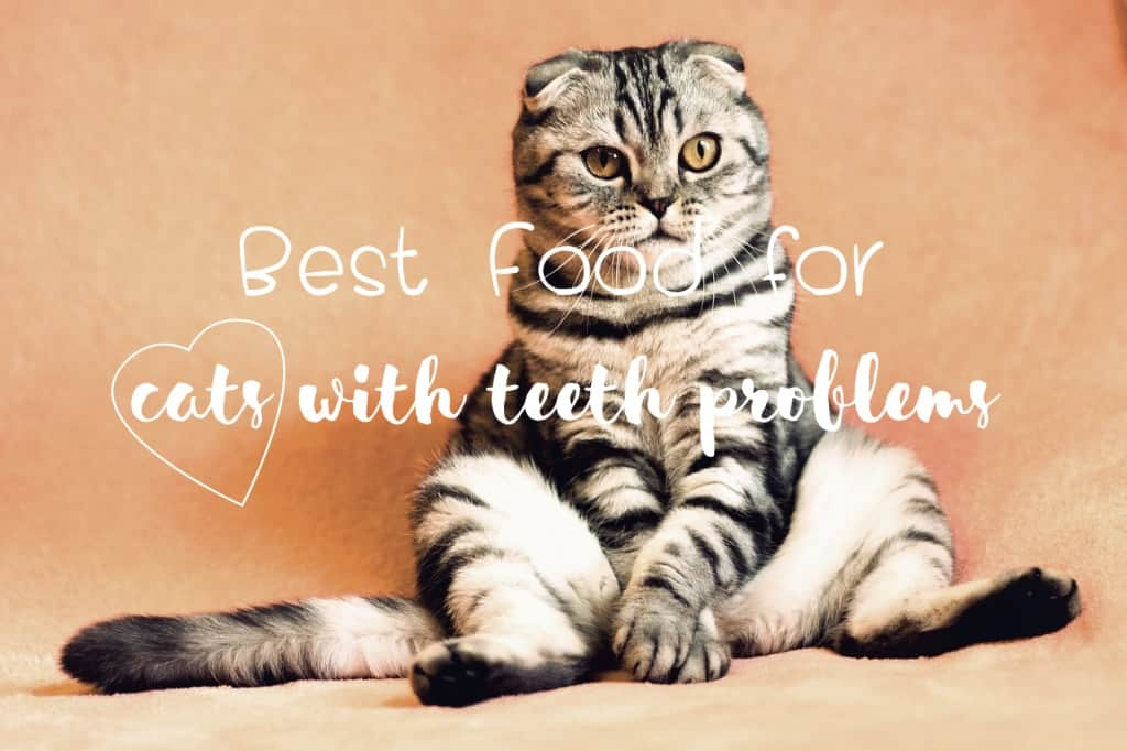 The Best Cat Food for Older Cats with Teeth Problems | Fluffy Kitty