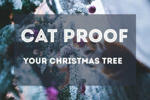 how to cat proof your christmas tree