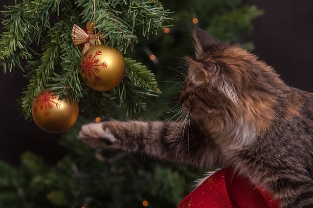 how to cat-proof your Christmas tree/ Fluffy Kitty