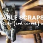 Can Cats Eat Table Scraps? | Fluffy Kitty