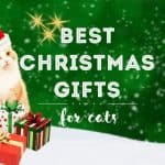Best Christmas Gifts for Cats | Fluffy Kitty
