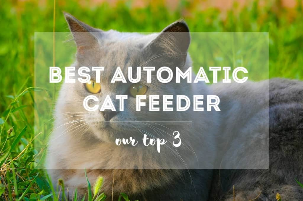 automatic guide feeder review best cat s buyer reviews