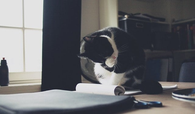 Why Do Cats Sit on Paper? | Fluffy Kitty