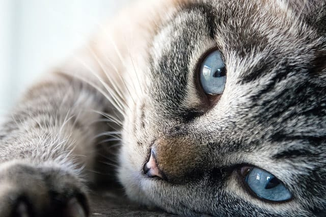 Why Do Cat's Eyes Water? | Fluffy Kitty