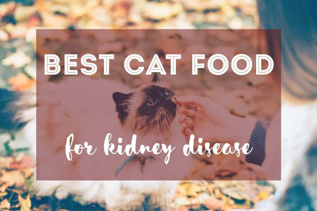 Human Food For Cats With Kidney Disease