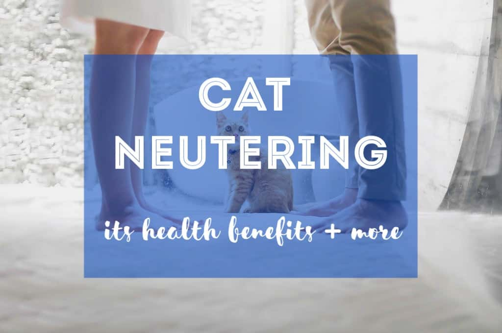 Cat Neutering | Fluffy Kitty