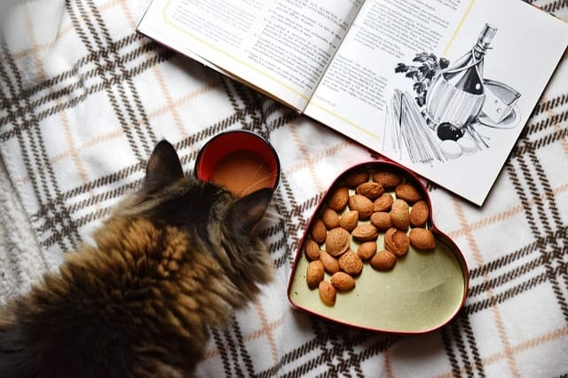 Can Kittens Eat Adult Cat Food?   Fluffy Kitty