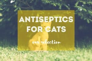 Best Antiseptic for Cats | Fluffy Kitty