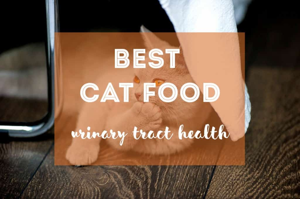 Best Cat Food for Urinary Tract Health | Fluffy Kitty