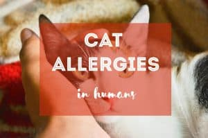 Ultimate Guide to Cat Allergies in Humans | Fluffy Kitty