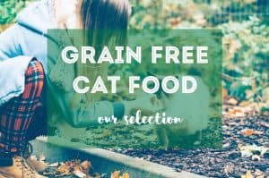 Best Grain Free Food for Cats | Fluffy Kitty